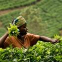 Кения и Руанда